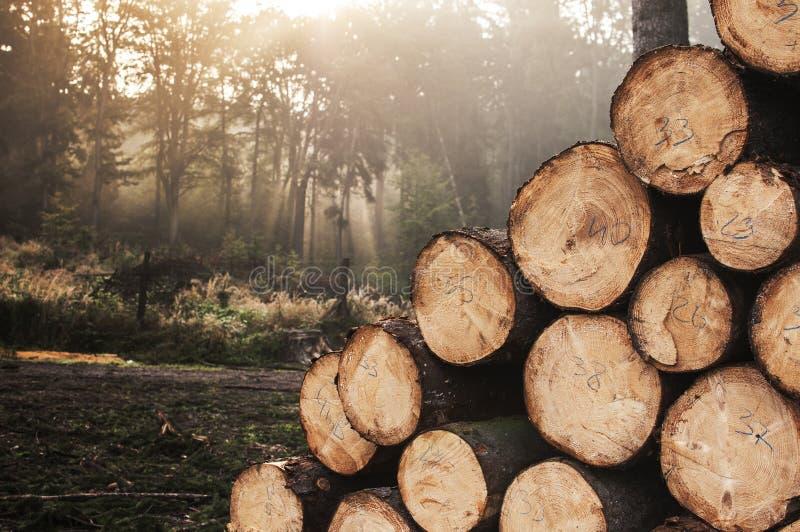 обезлесение стоковое изображение