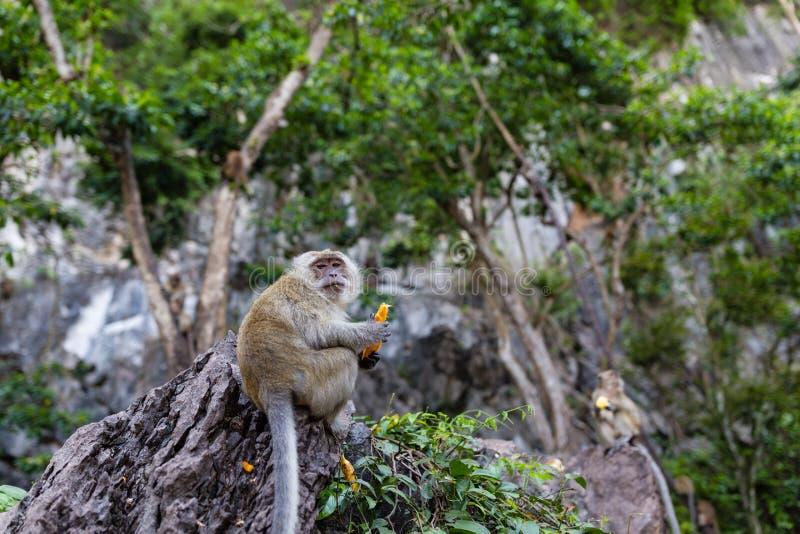 Обезьяна есть свежие фрукты на открытом воздухе Животное Таиланда стоковое фото rf