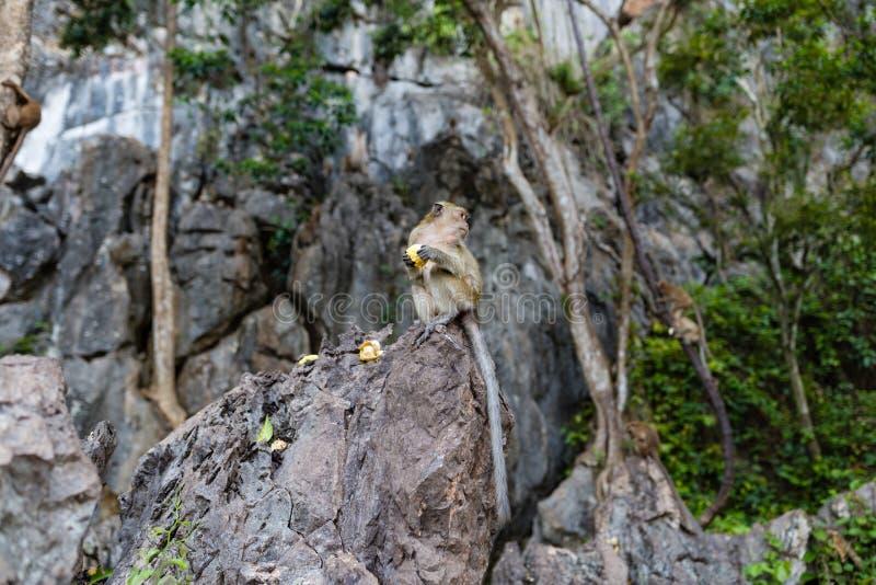 Обезьяна есть свежие фрукты на открытом воздухе Животное Таиланда стоковая фотография