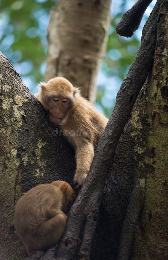 Обезьяна живя на дереве стоковое изображение rf