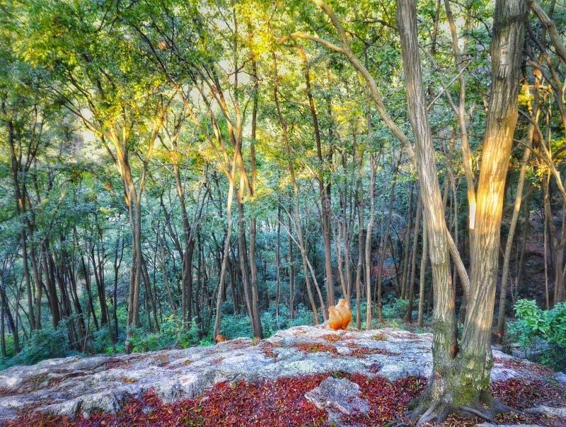 Обезьяна макаки живет в лесе стоковое изображение rf