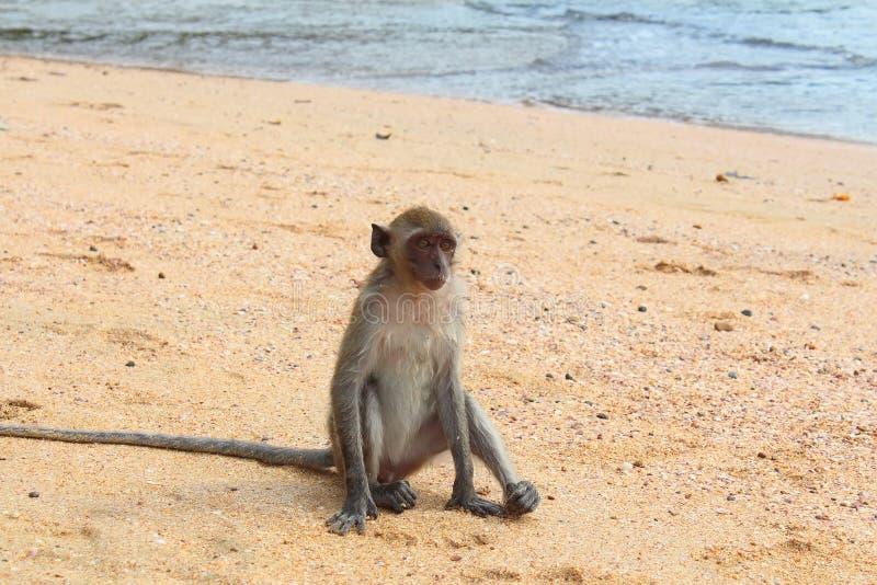 Фото обезьян на пляже 34