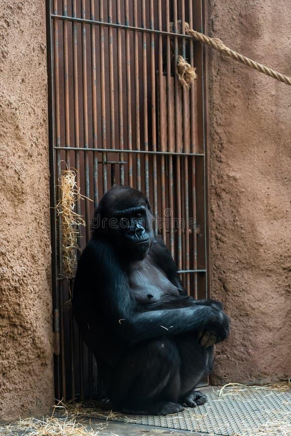 Обезьяна на зоопарке стоковые фото