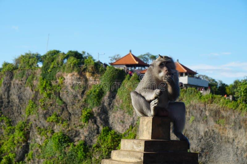 Обезьяна похитителя в виске Бали стоковые изображения