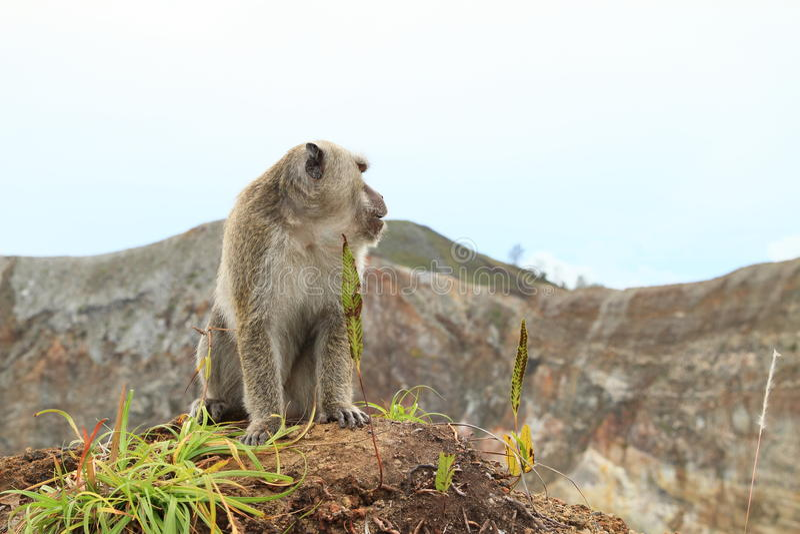 Обезьяна сидя na górze кратера на Kelimutu стоковые фотографии rf