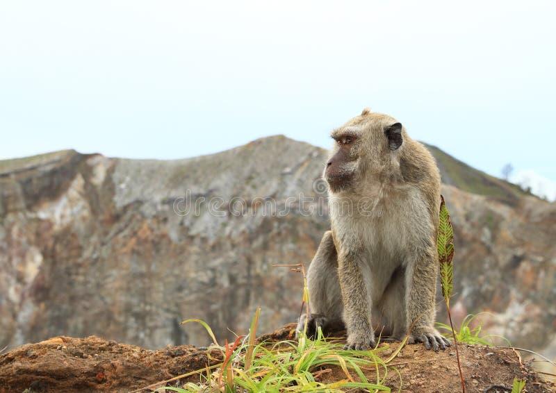 Обезьяна сидя na górze кратера на Kelimutu стоковая фотография rf