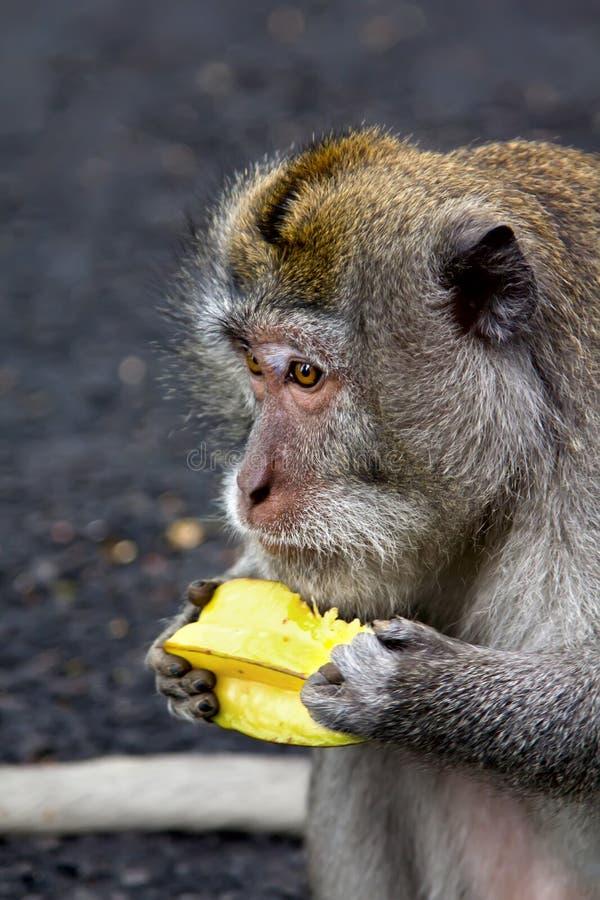 Обезьяна eatting плодоовощ стоковое фото rf