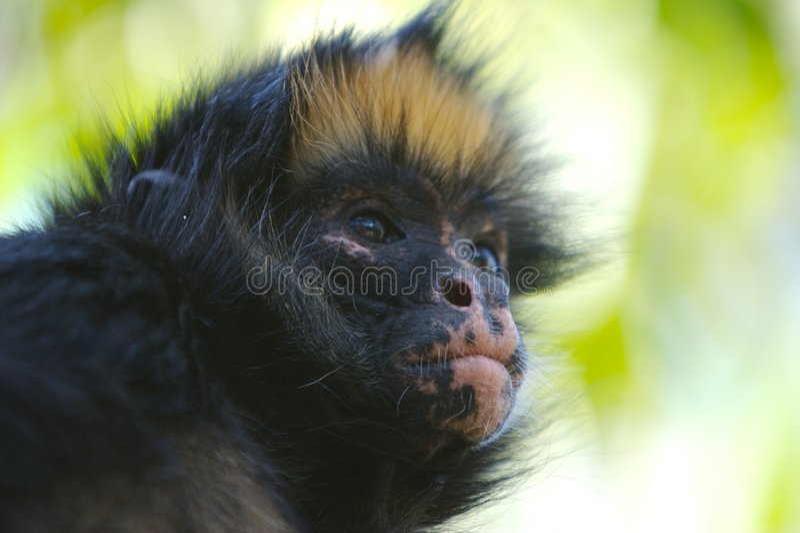 обезьяна s стороны стоковое фото