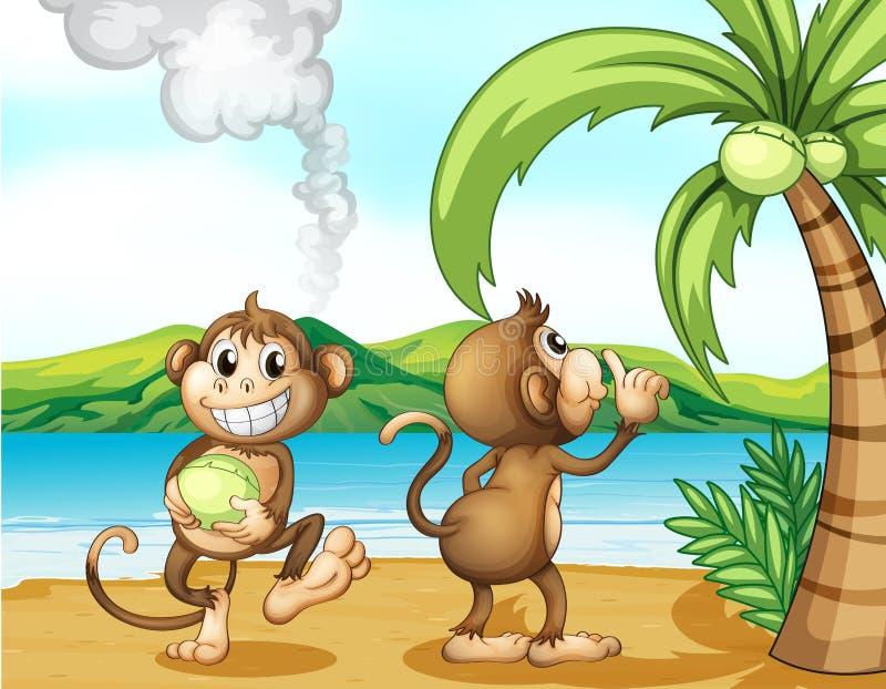Фото обезьян на пляже 84