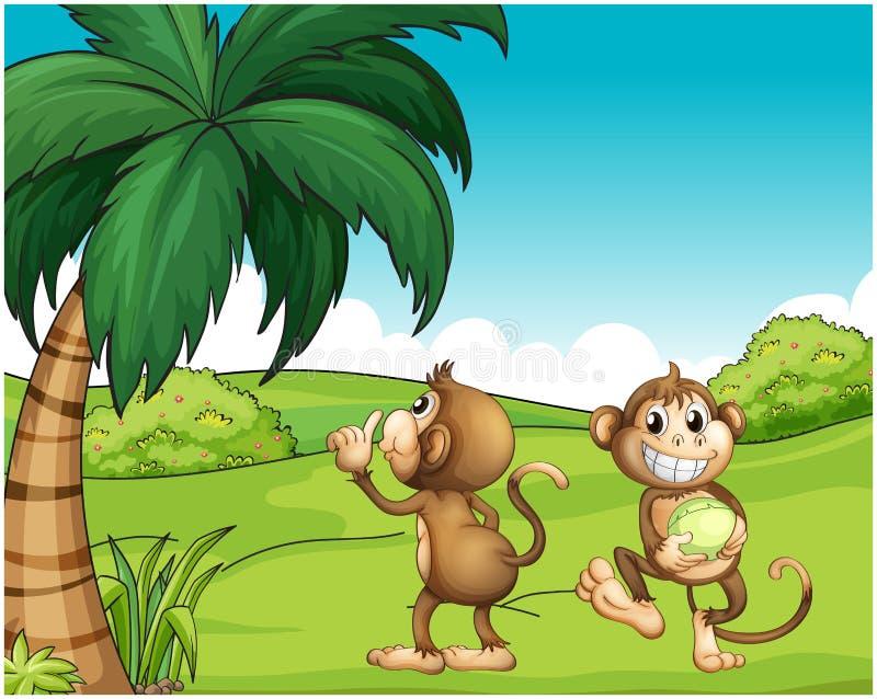 2 обезьяны около кокосовой пальмы иллюстрация вектора