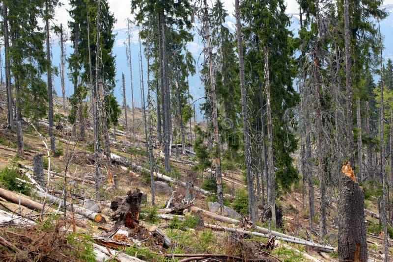 Обезлесение afted изображением стоковое фото rf