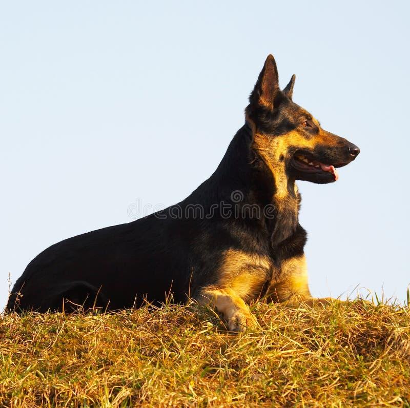 обеспеченность собаки стоковое изображение rf