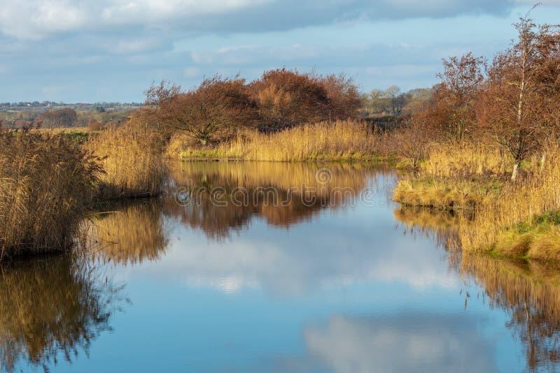 Облака и тростники отраженные на неподвижном озере стоковые изображения rf