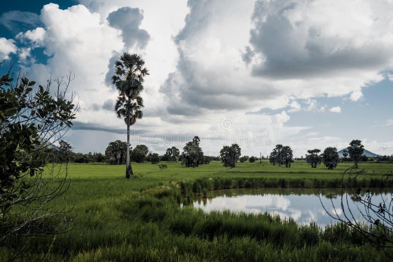 Облака над покрытым тропическим ландшафтом леса и озера на предпосылке пальм стоковые изображения rf