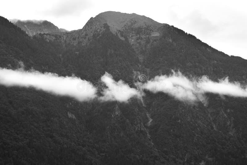 Облака нижнего яруса над лесом хвои стоковые фото