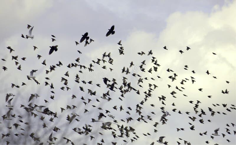 облака птиц