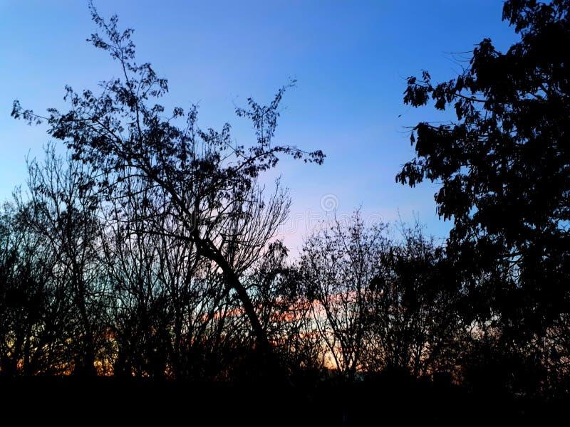 Облака рассвета розовые стоковое фото