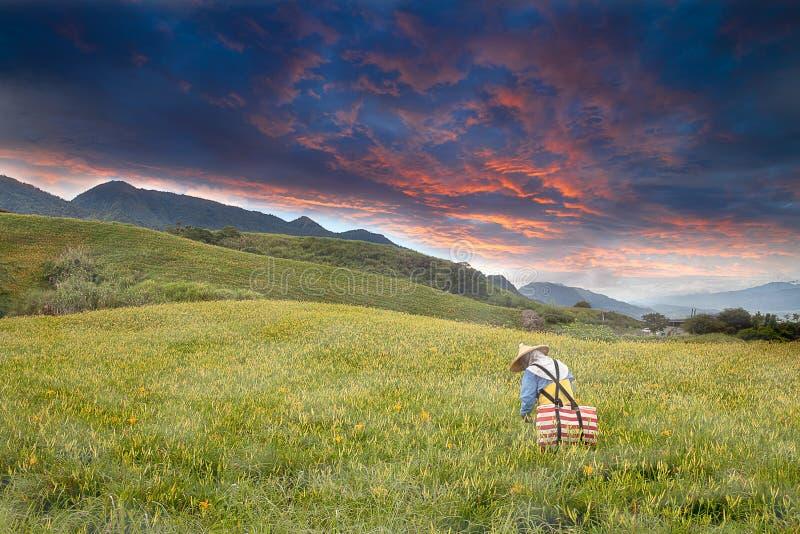 облака цветок daylily славный стоковое фото rf