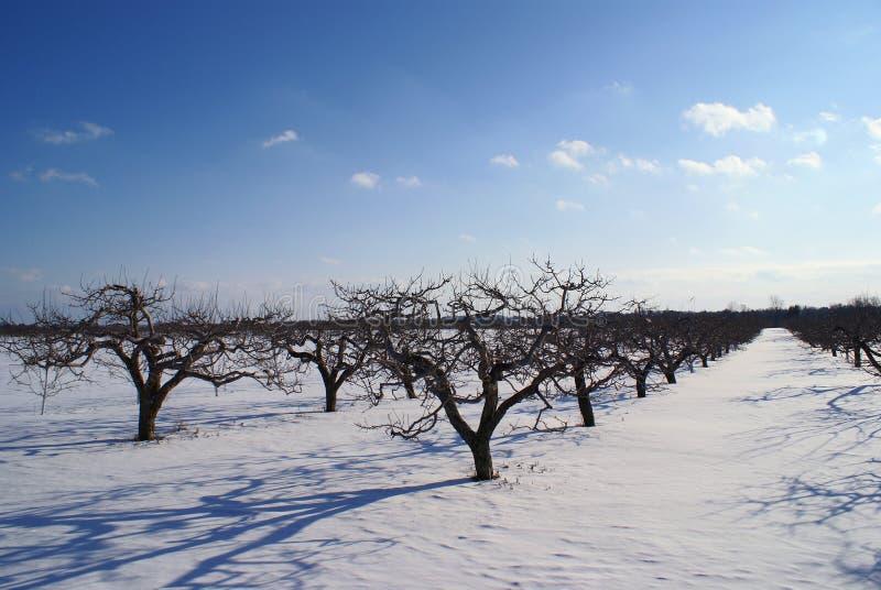облака яблока голубые будут фермером зима стоковое изображение