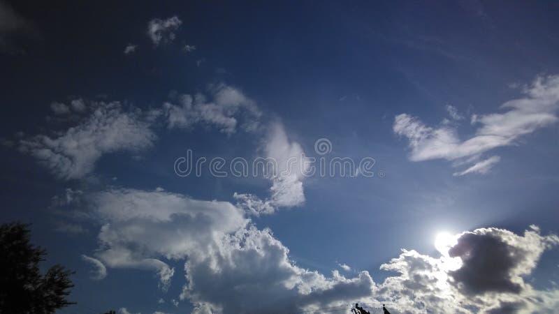Облако Bull с Солнця задней частью внутри стоковое фото rf