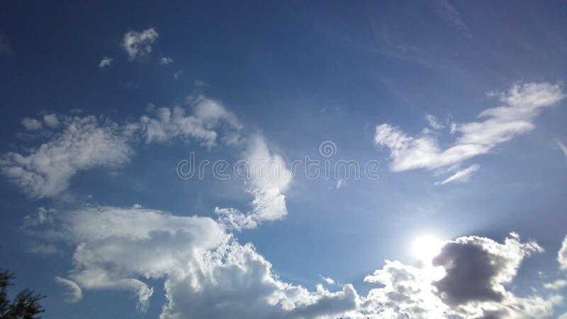 Облако Bull с Солнця задней частью внутри стоковые фотографии rf