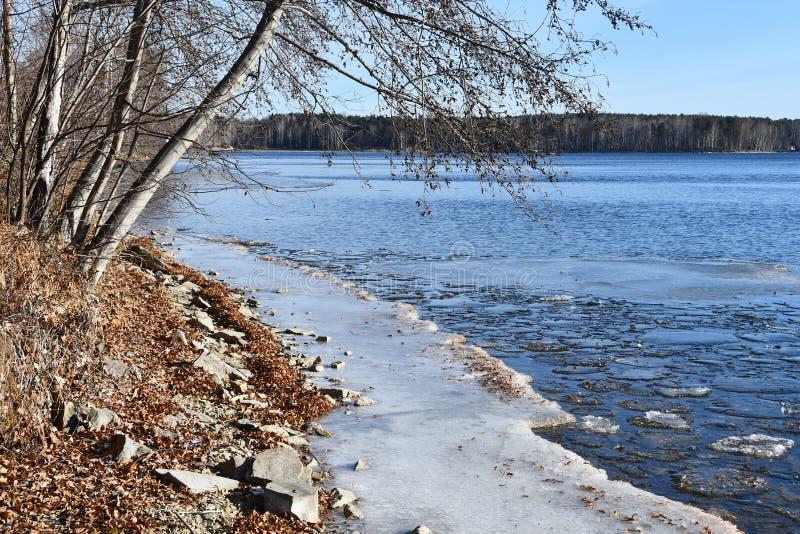 Область России, Челябинска, памятник природы - озеро Uvildy Небольшой раздел льда около берега в солнечном дне в ноябре стоковые фото