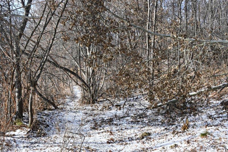Область России, Челябинска Первый снег в лесе на береге озера Uvildy в солнечном дне в ноябре стоковые фотографии rf