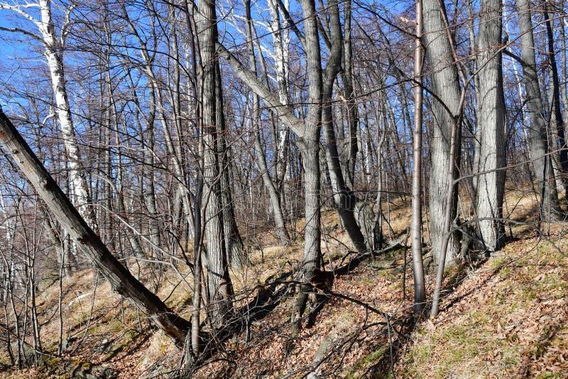 Область России, Челябинска Смешанный лес на берегах озера Uvildy в солнечном дне в ноябре стоковые фото