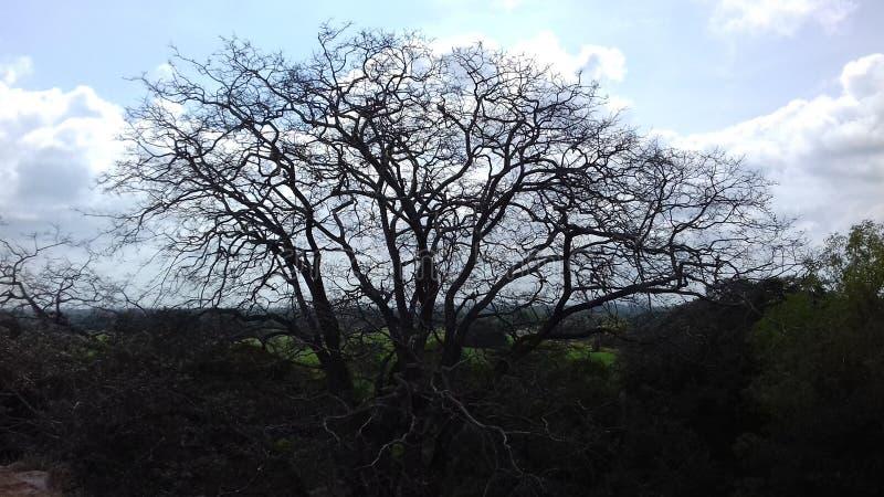 Облачное небо и мертвое дерево стоковые изображения rf
