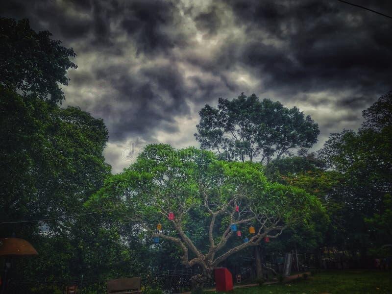 Облачное небо с зелеными деревьями стоковые изображения rf