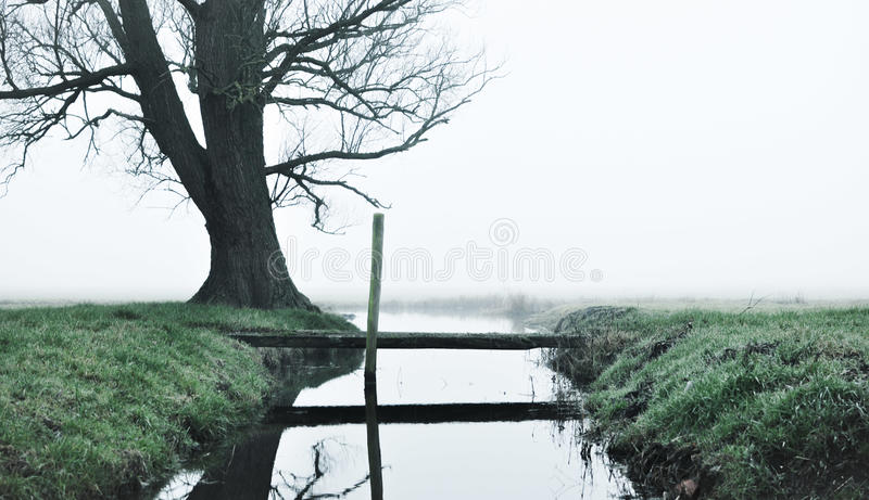 Обманщик около дерева стоковое фото