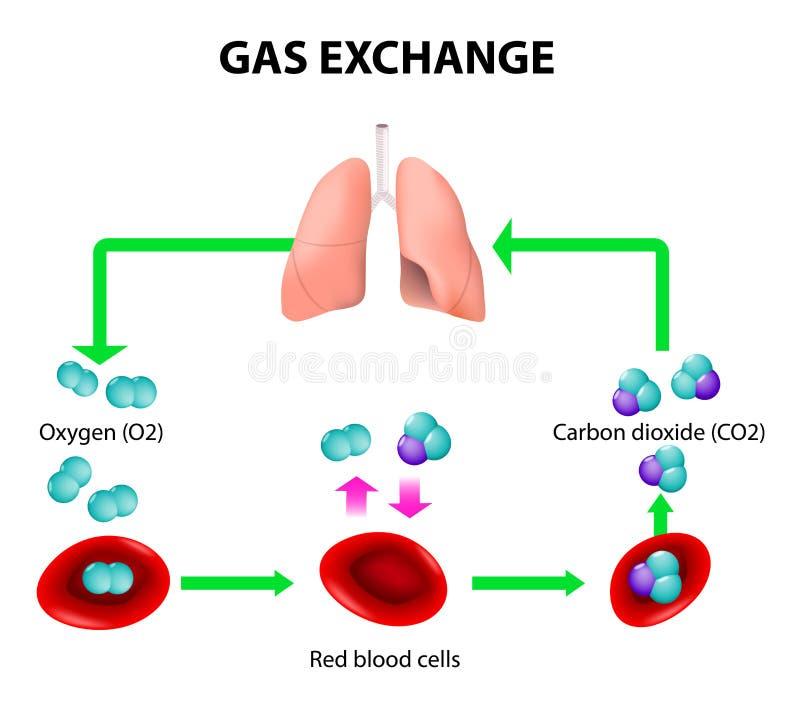 Обмен газа иллюстрация вектора