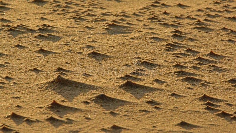 Обмотайте трассировки в песке с ight и тень f низкий вечер греет на солнце стоковое фото