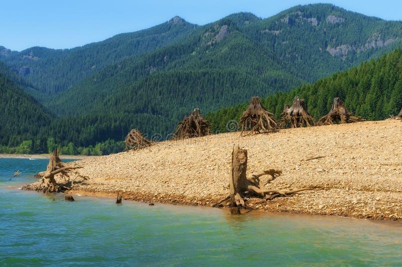 Обмылки деревьев вдоль бечевника стоковое изображение rf