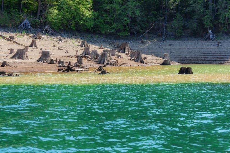 Обмылки деревьев вдоль бечевника стоковое фото
