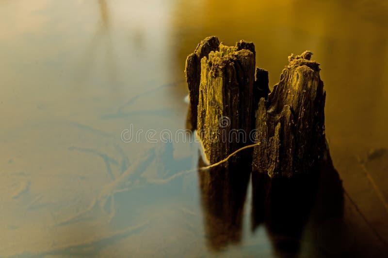 Обмылки пня в русле реки стоковая фотография