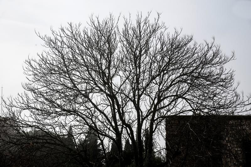 Обнаженное дерево на зимний день с туманом стоковые изображения rf