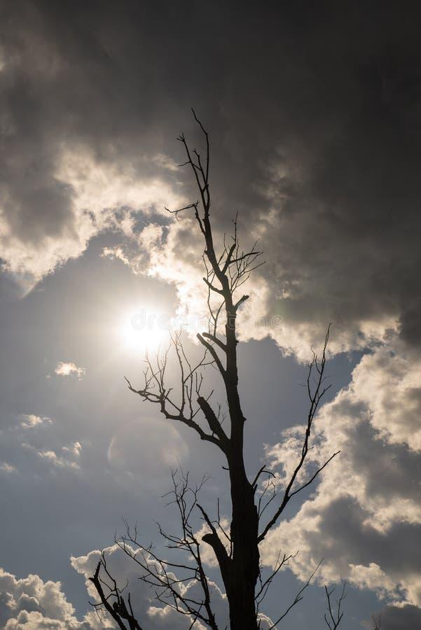 Обнаженное дерево окруженное лугом, смешанным лесом и голубым небом Предпосылка окружающей среды стоковые фотографии rf