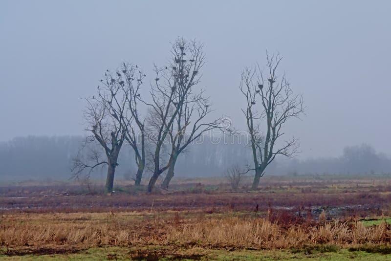 Обнаженные деревья и тростник зимы в тумане в болоте во фламандской сельской местности стоковая фотография rf