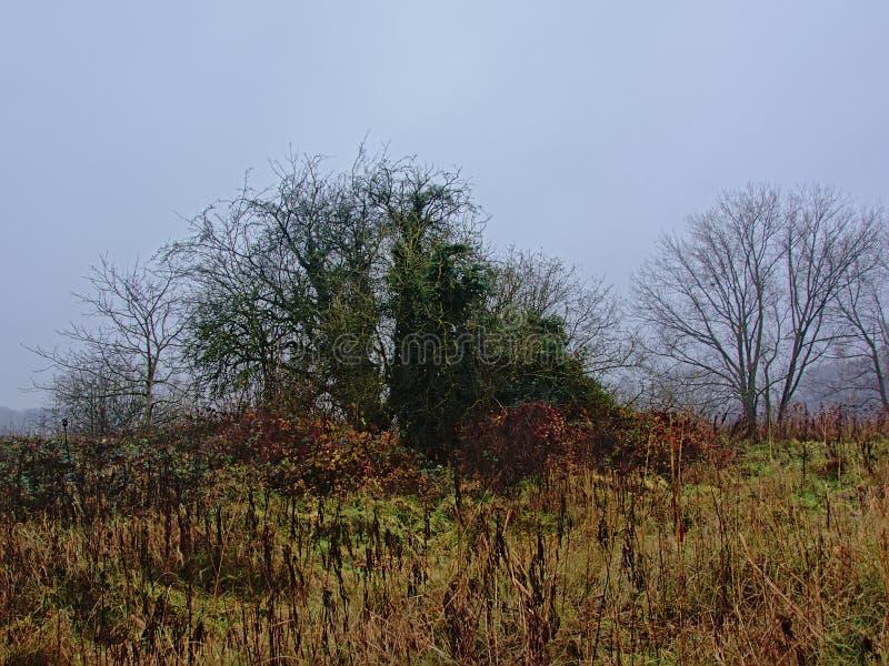 Обнаженные деревья и тростник зимы в тумане во фламандской сельской местности стоковые фотографии rf