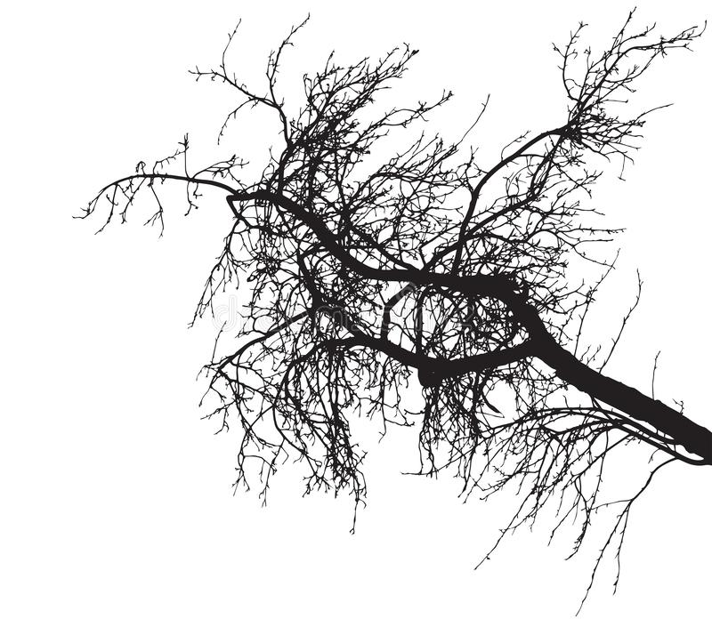 Обнаженный силуэт ветви дерева на белой предпосылке Ветвь дерева без листвы r иллюстрация вектора