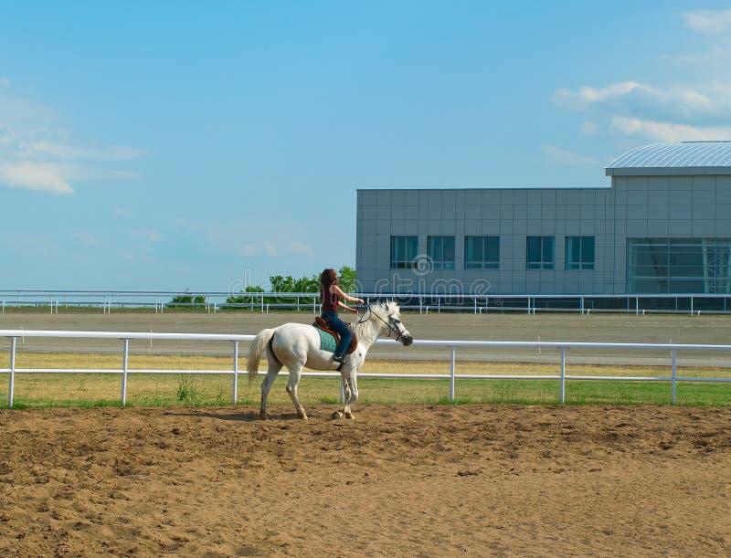 обнимает белизну лошади девушки стоковая фотография
