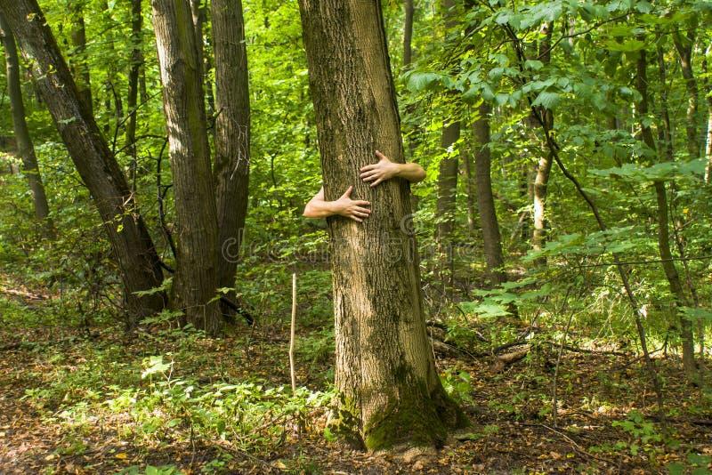 обнимать вал Конец-вверх рук обнимая дерево a стоковая фотография