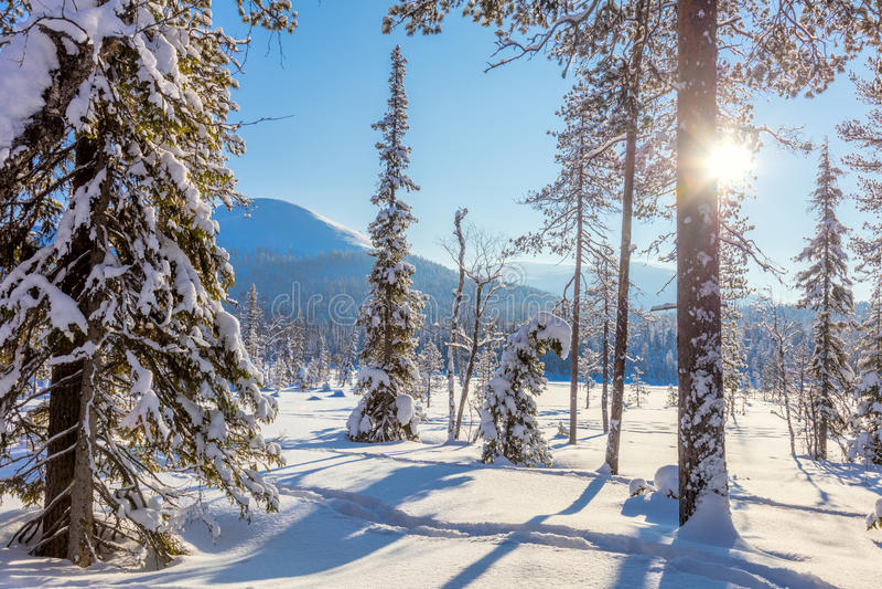 Обои ландшафта изумительной зимы солнечные стоковые фотографии rf