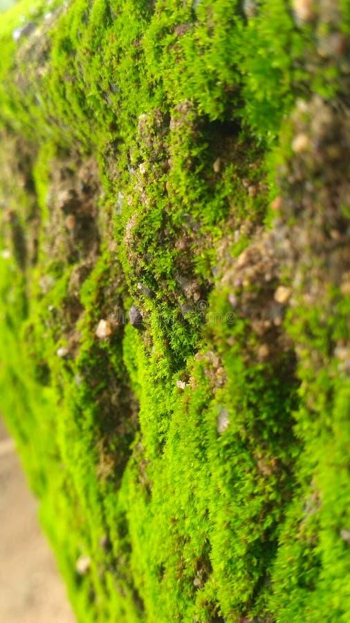 Обои водорослей стоковые изображения