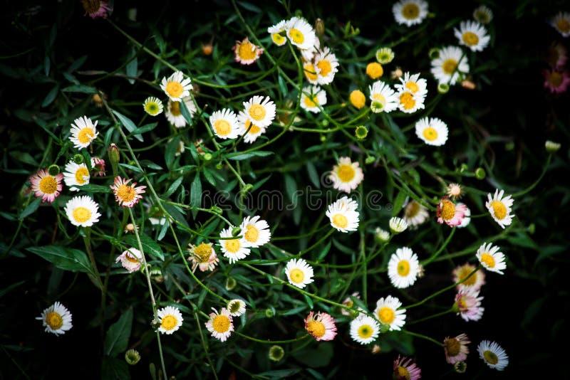 Обои в цветке стоковая фотография rf