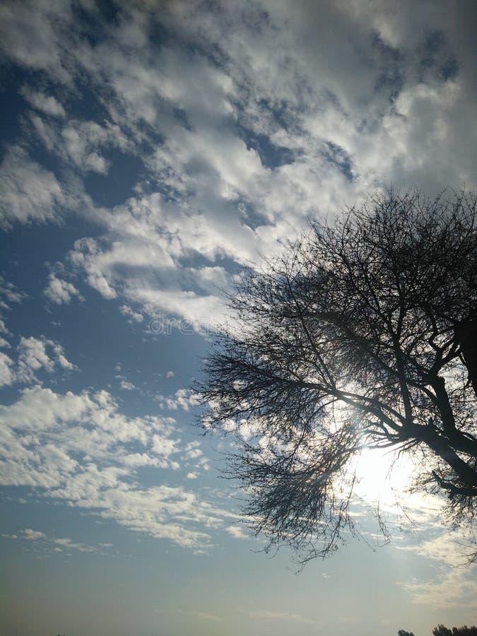 Обои дерева стоковые изображения