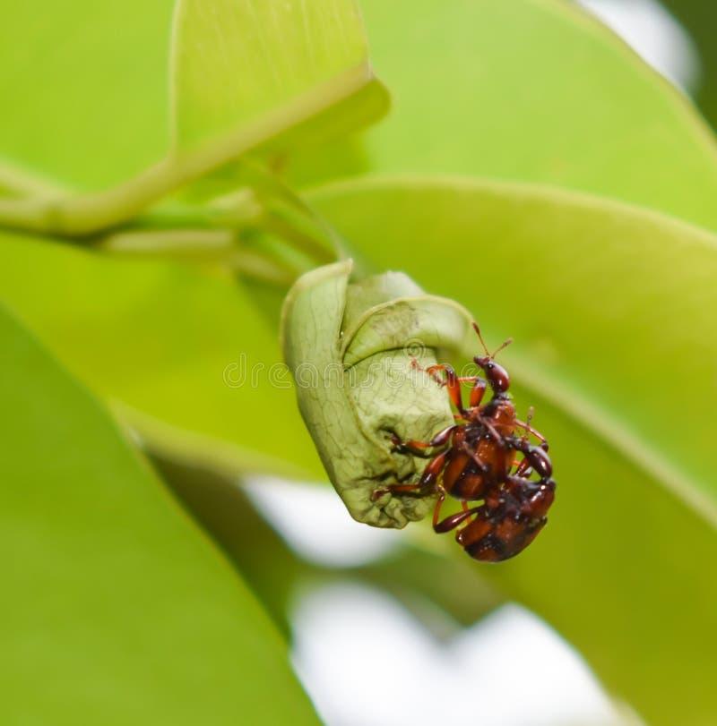 Обои макроса жука стоковая фотография rf