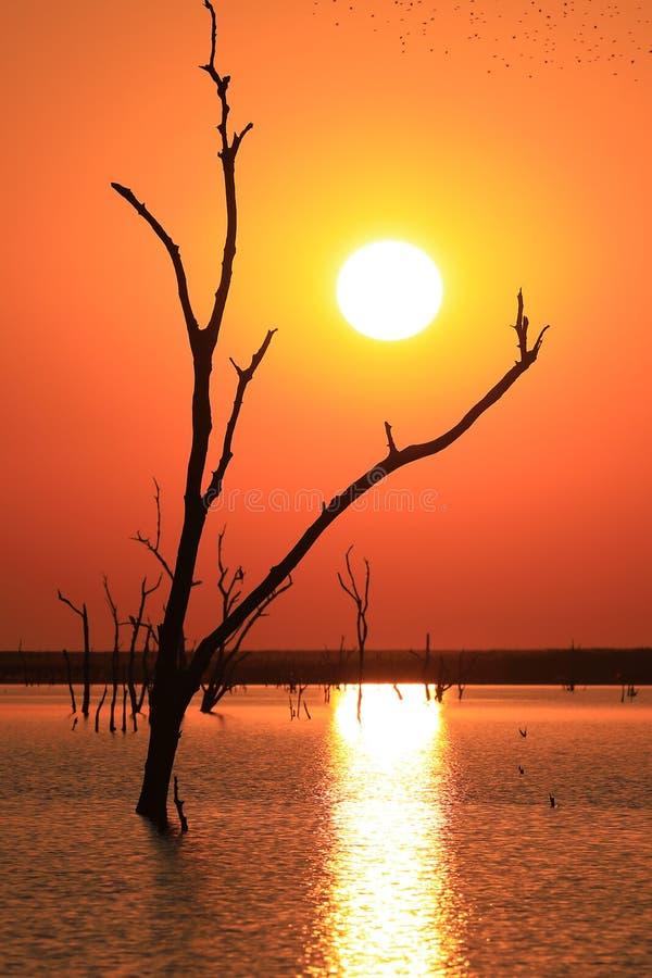 обои Мертвое дерево на озере на заходе солнца стоковая фотография