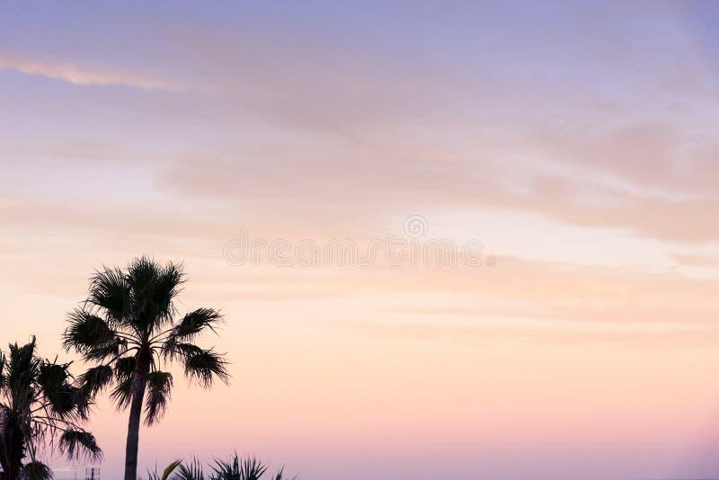 Обои пальм захода солнца стоковое фото